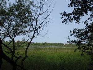 Oshawa Second Marsh